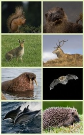 Mammals collage