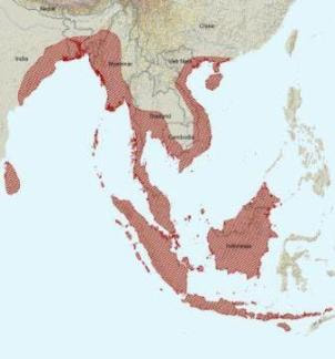 Asian water monitor range