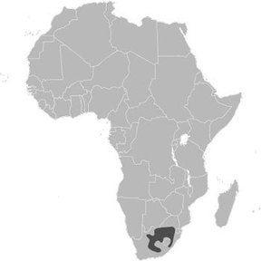 Black Wildebeest range